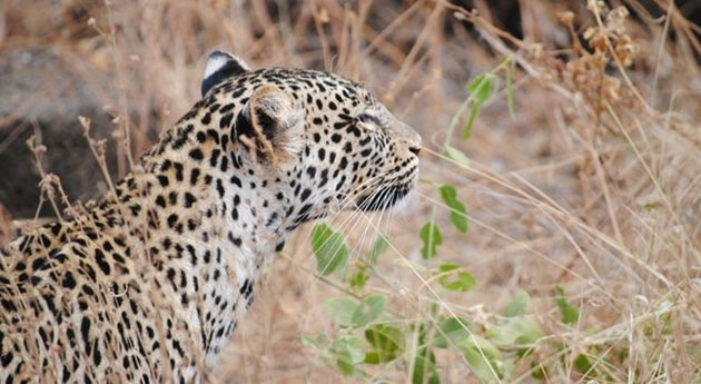 A Week On An African Safari: A Guide to What You'll Discover and Experience in Africa, www.kenya-info.com
