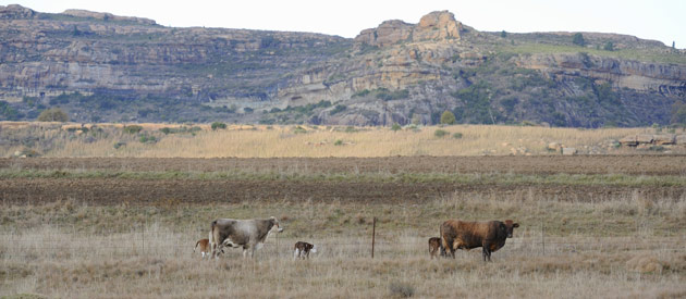 Ficksburg, situated in the Thabo Mofutsanyana region of the Free State Province, South Africa
